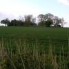 Copse from railway track