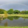 Midland Oak fields, Lillington