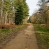 Bridleway in Lord's Wood