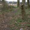 Woodland path on Glade Hill