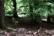 Banstead Wood