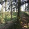 Wychbury Hill Fort - Eastern end