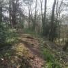 Wychbury Hill Fort - Southern Rampart