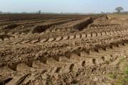 Sandy soil