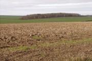 Farmland Toward Charleston Farm