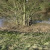 River Leam in spate, Edmondscote