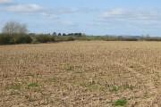 Remains of a rape crop
