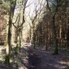 Footpath in Abbey Woods