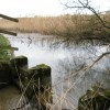 Marsworth Reservoir, Tring – Reed Beds and Sluice