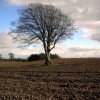 Ploughed Field and Tree