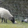 New Arrivals in the Shabden Valley