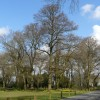Trees at Chipstead