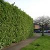 Privacy, Millbank, Warwick