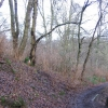 Woodland on Corstorphine Hill
