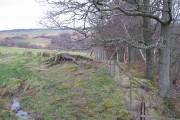 Edge of an oak wood
