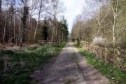 A track in western Bagley Wood