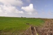 Field north of Llanbethery
