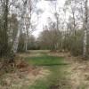 Silver Birch Woodland on Bookham Common