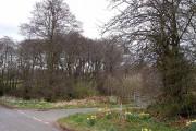Woodland and farm turning