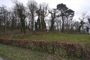 A corner of Cowran Woods