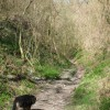Byway on the County Boundary – the Holloway gets deeper