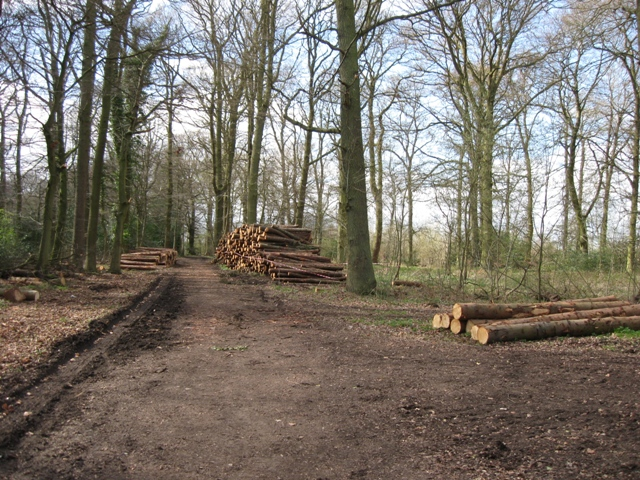 The Track through Pavis Wood