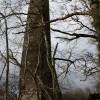 Chimney for Drumlanrig Castle