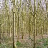Woodland next to the Bridleway