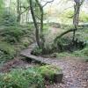 Woodland below Froggatt Edge