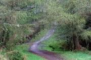 Track in Craig Phadrig Forest
