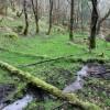 Woodland stream, Craig Phadrig, Inverness