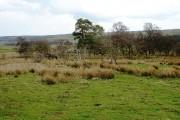 Declining woodland