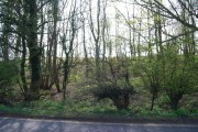 Woods by the A 265 (Burwash Rd)