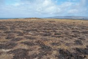 After the muirburn
