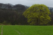 Londesborough Hill