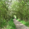 The Footpath from Wilstone Reservoir