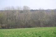 Browndown Wood