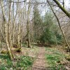 Footpath through Beckington Wood