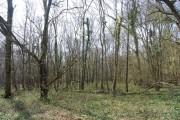 Kemp's Wood (2)