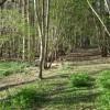 Temple Hill Wood, Warwick Castle Park