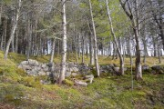 Birchwoods at Craggie.