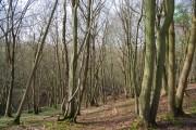 Green Wood (2)