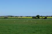 Farmland Between Poling and Angmering