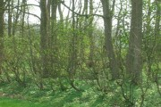 Carr Lane Plantation