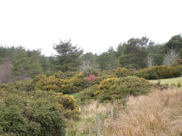 Woodland beside Astle