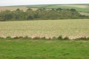 Farmland East of B1249