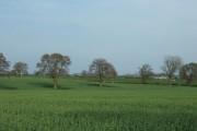 View from Marston Lane