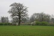Farmland Near Bentley Heath