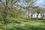Wareham Wood, Potters Gate