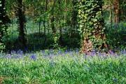 Saltwells Nature Reserve